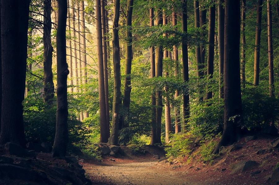 bando prevenzione danni foreste
