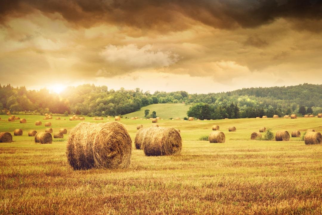coronavirus comparto agricolo