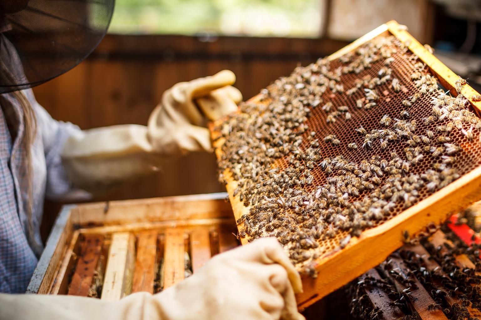 legge apicoltura