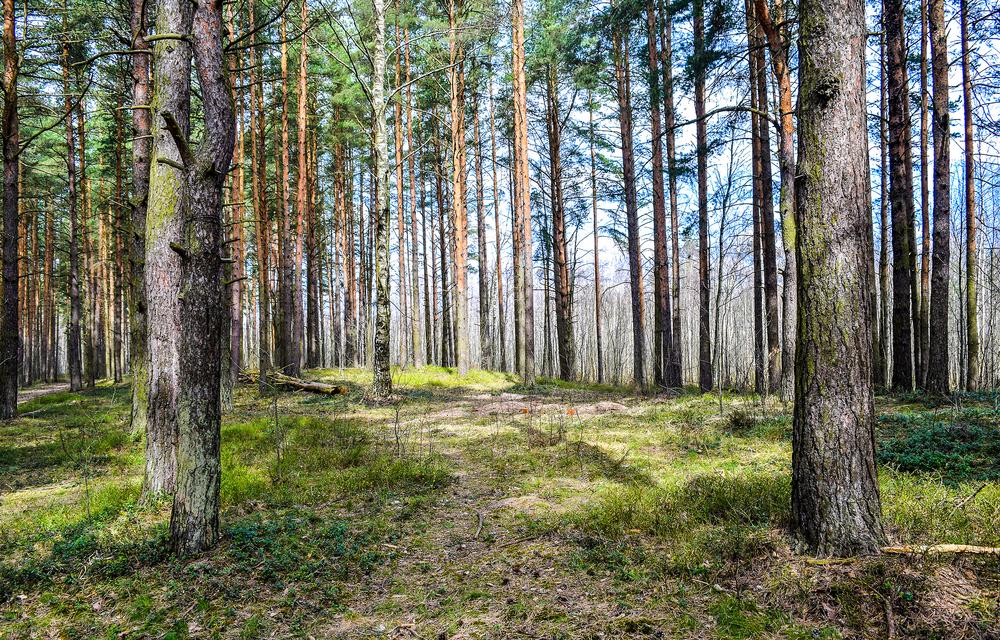 controllo su tagli boschivi
