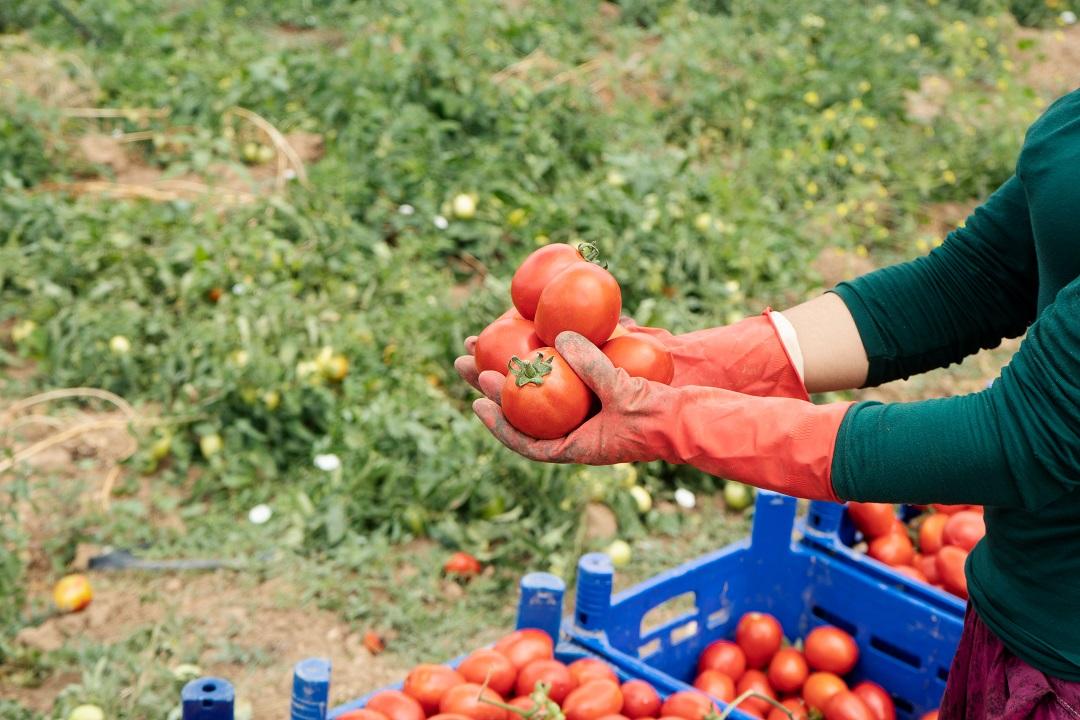 imprese agricole voucher semplificazione