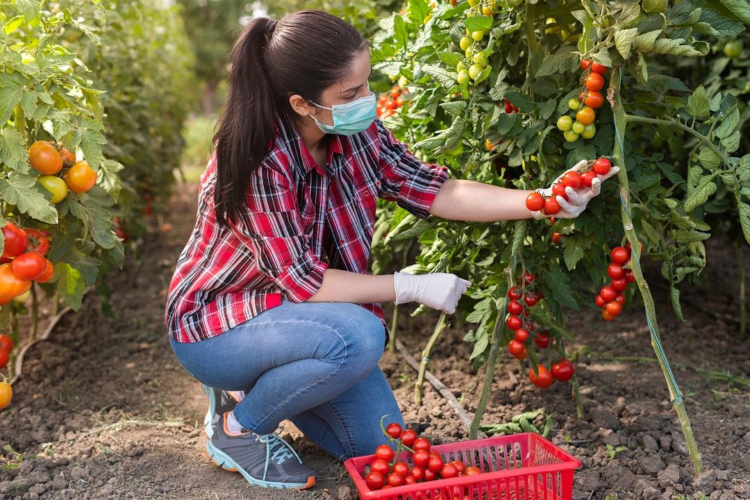 aziende agricole under40