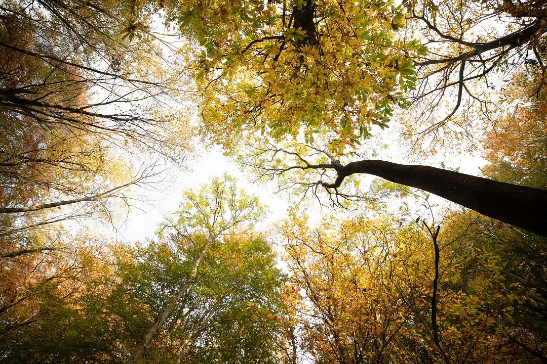 carta foreste lombardia