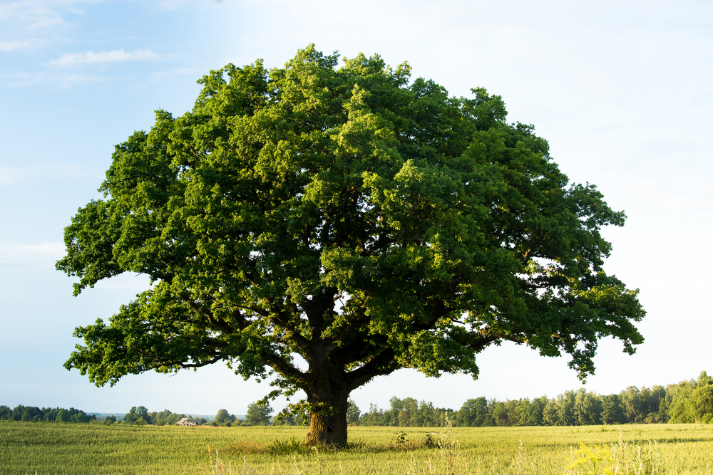 giornata albero 2020