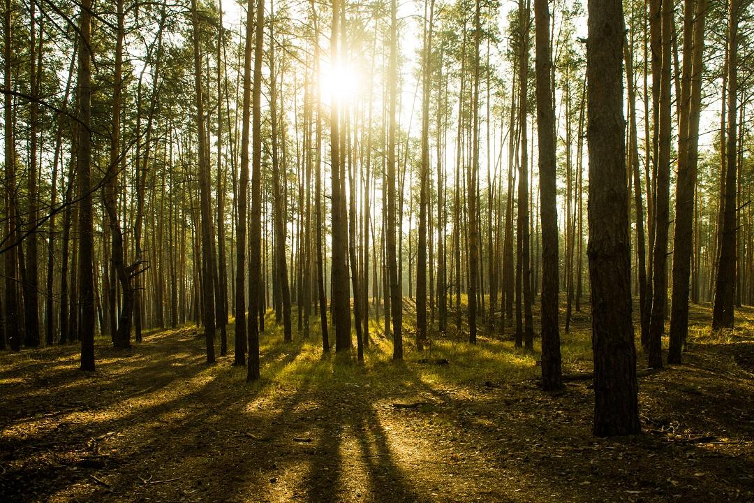 rapporto foreste lombardia 2019