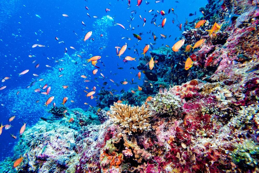 Bicocca Maldive