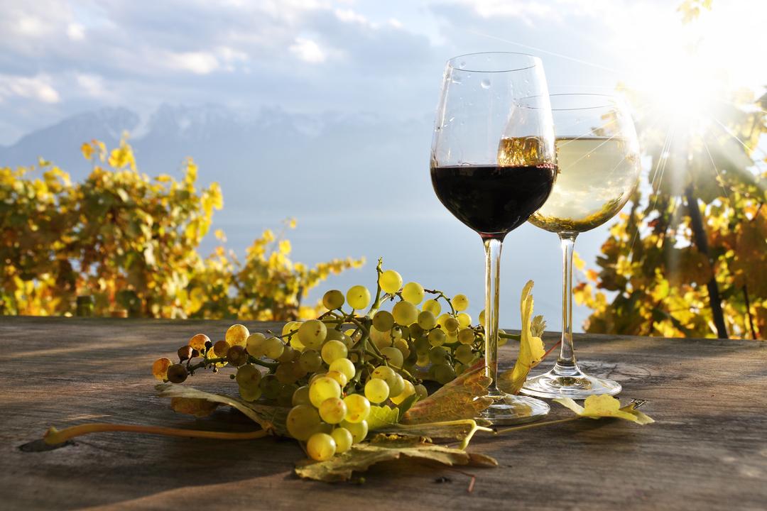 vino annata 2020