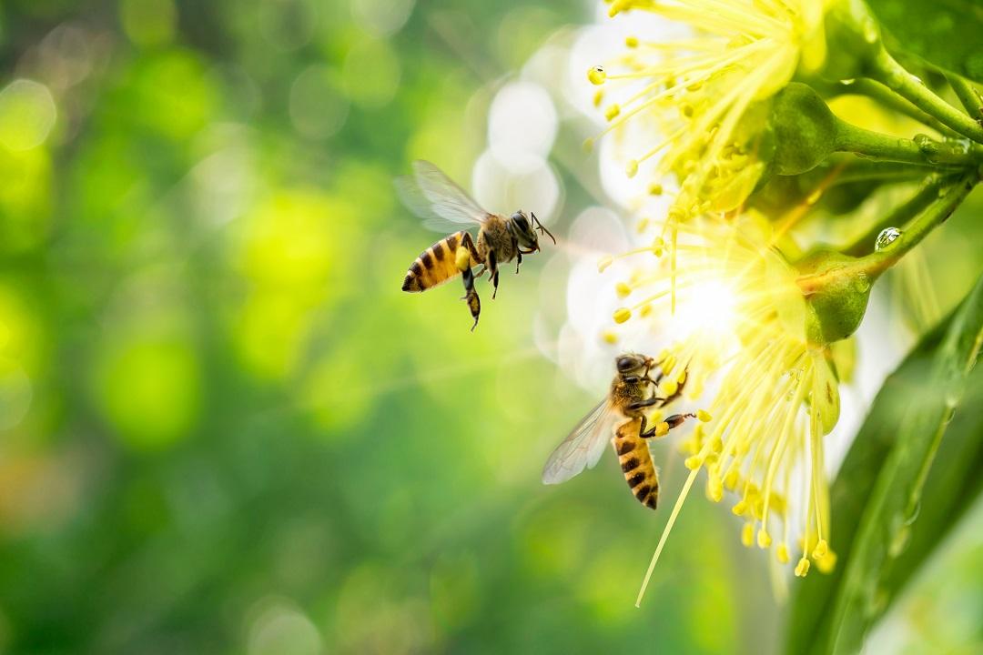 apicoltura parchi riserve