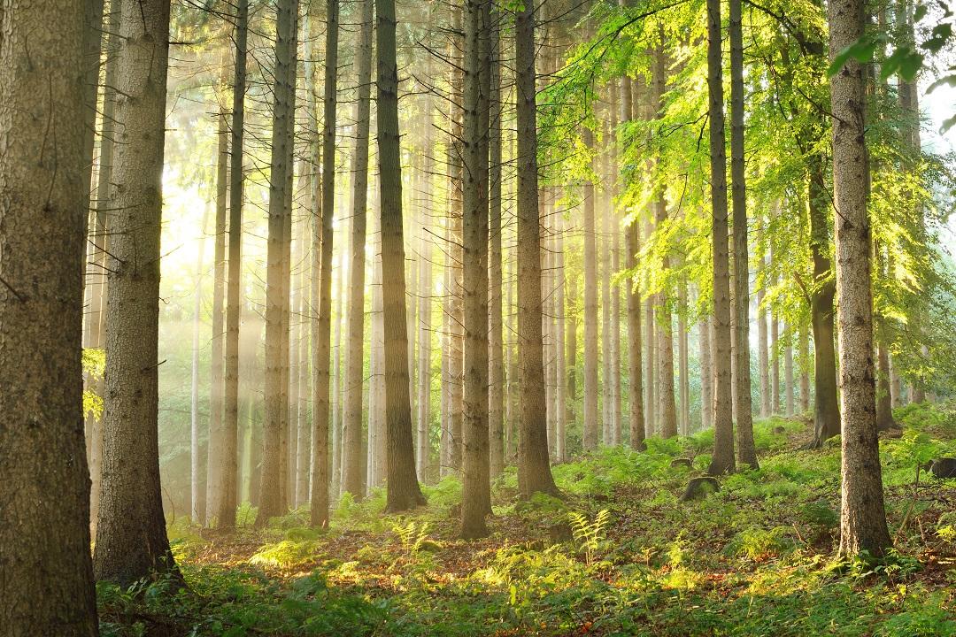 boschi pianura collina