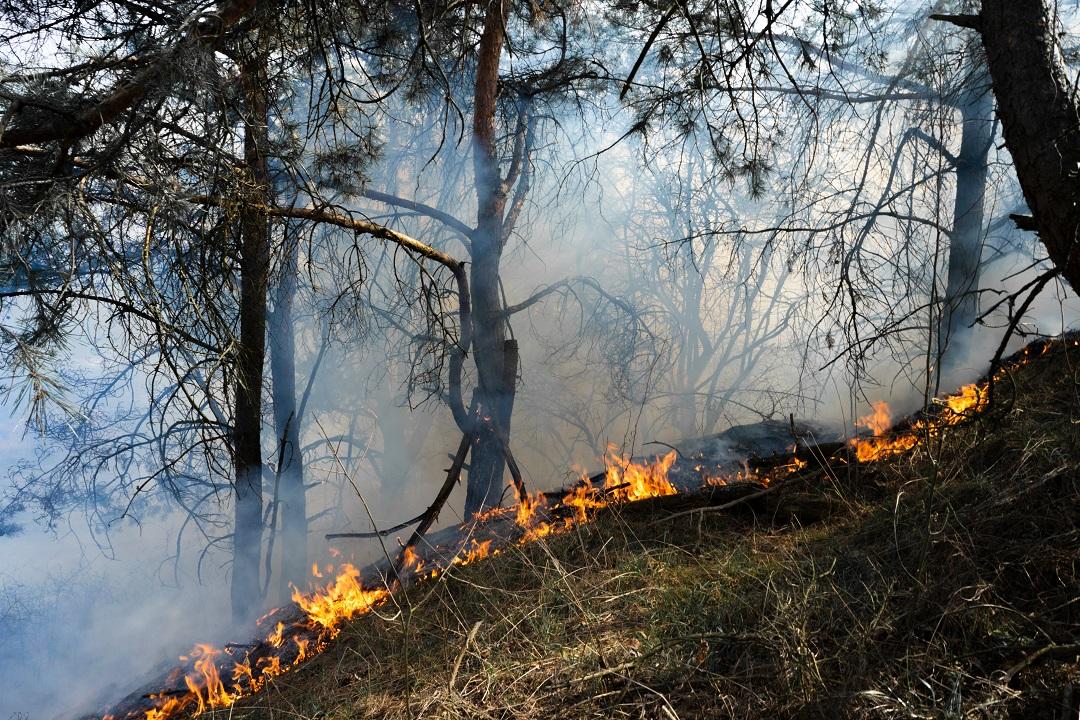 prevenzione incendi territorio forestale