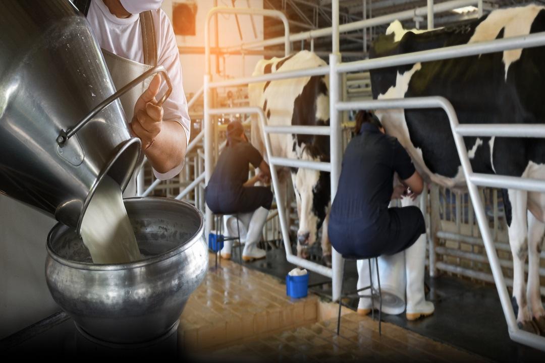 latte bresciano