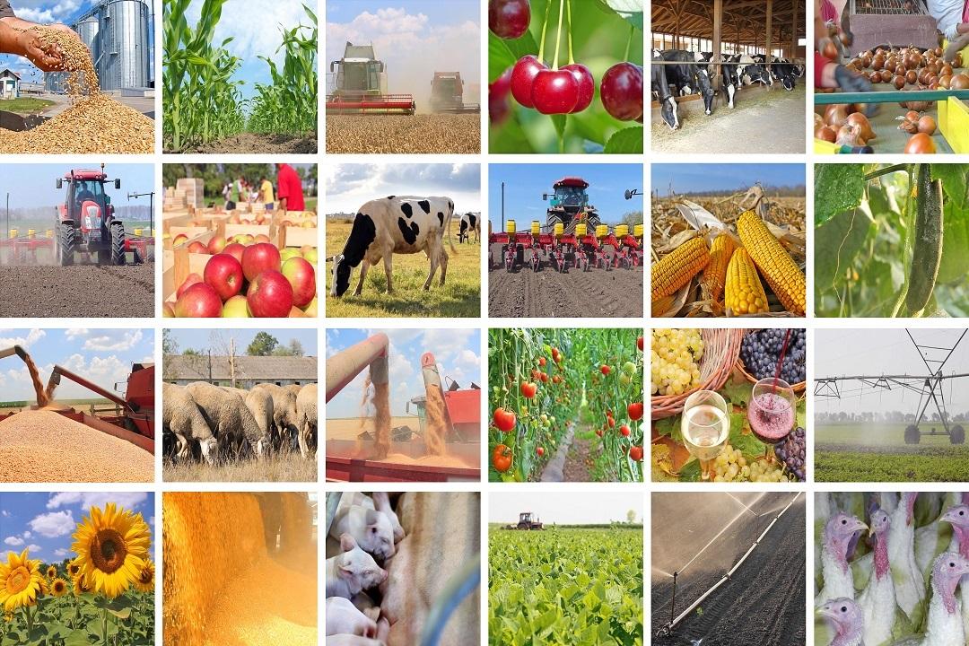 giornata nazionale agricoltura