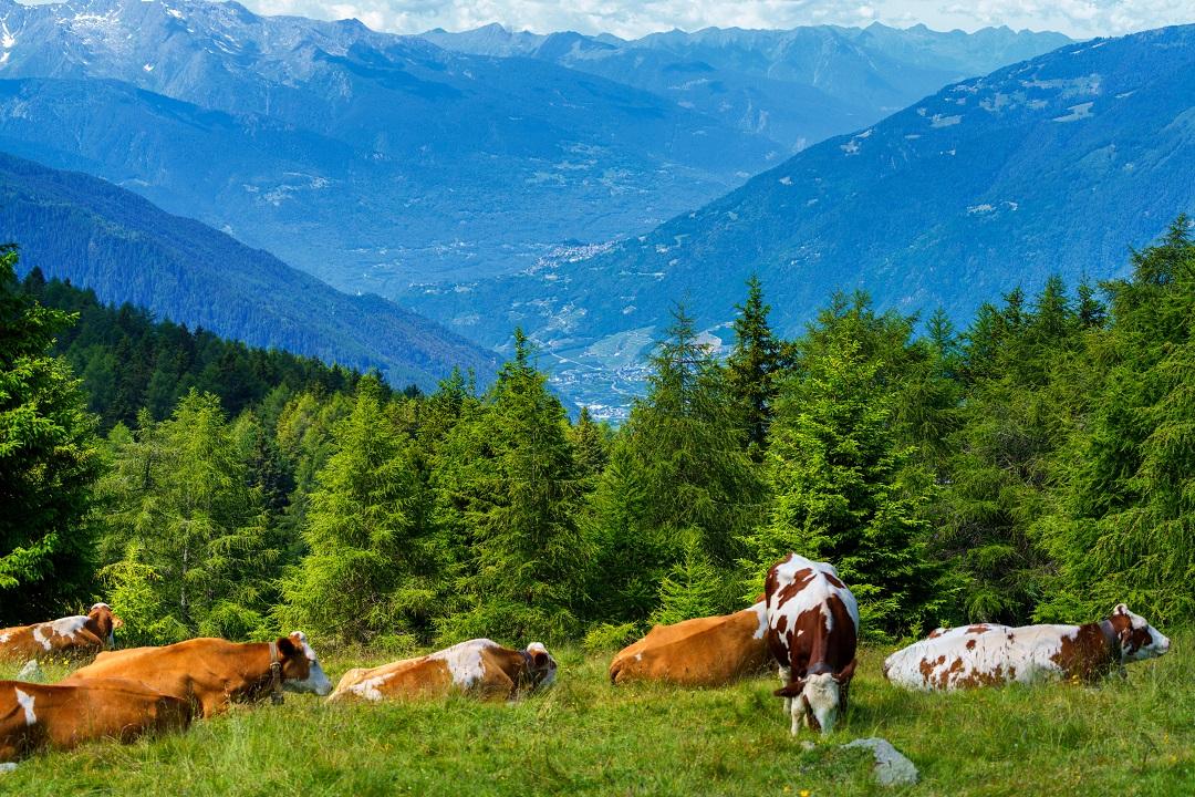 agricoltura montagna programmazione agricola