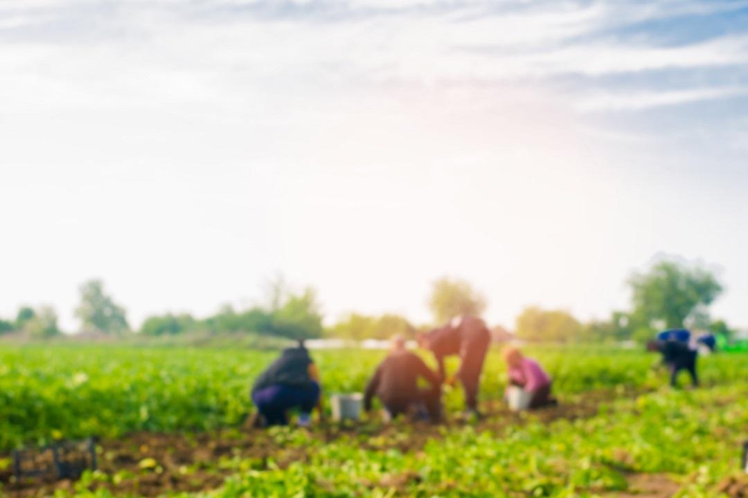 Reddito cittadinanza e agricoltura