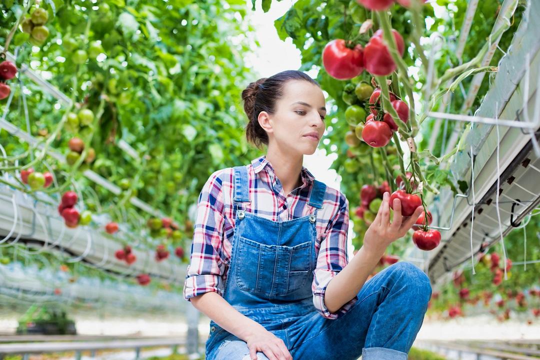 agricoltura urbana vertical farm